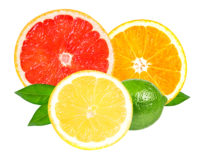 Citrus Morocco grapefruit orange maroc late navel